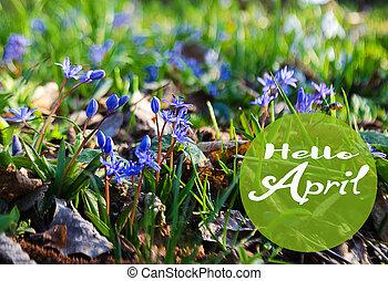 small blue flowers bloom in spring muskari