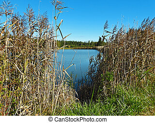 Small blue lake view through the reeds