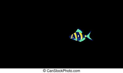 Small Blue- yellow Aquarium Fish Alpha Matte - Small Blue-...