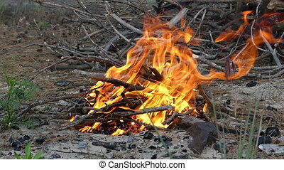 Small bonfire made of brushwood on a lake bank in summer -...