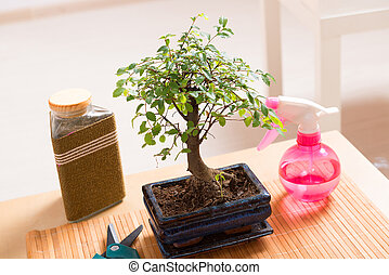 Small bonsai tree