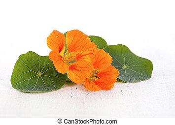 Small bouquet of edible nasturtium flowers