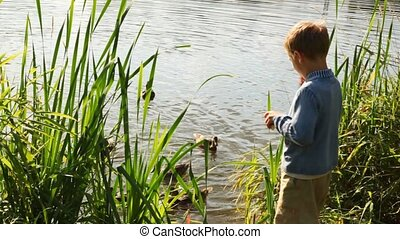 small boy feeds flight of weft beside pond in park in summer