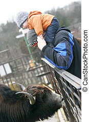 small boy on father's shoulders in zoo