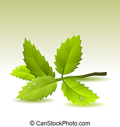 Small branch with green leaves on light background
