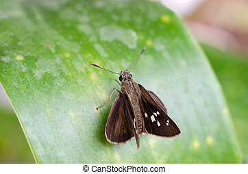 Small brown butterfly on green leaf