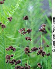 small brown flowers