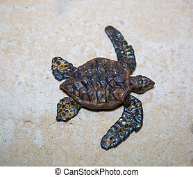 Small brown turtle crawling on the white sea sand, marine life, reptiles