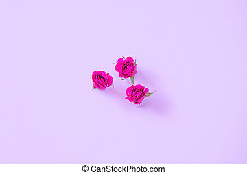 Small buds of pink roses on a bright background
