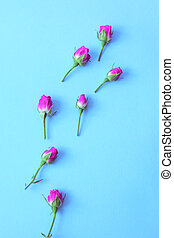 Small buds of pink roses on a bright blue background