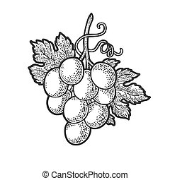 small bunch of grapes sketch engraving vector illustration. T-shirt apparel print design. Scratch board imitation. Black and white hand drawn image.