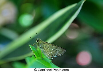 Small Butterfly on a Leaf