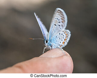 butterfly sits on a finger