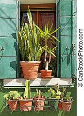 small cacti garden