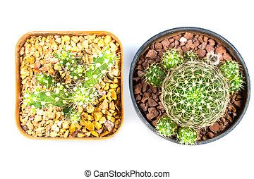 small cactus houseplant in pot on white background