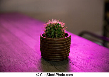Small cactus in flower pot on purple background with neon glow.