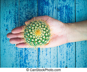 Small cactus in the hands of men, environmental care concept