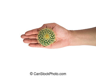 Small cactus photos in the hands of men separated on a white background