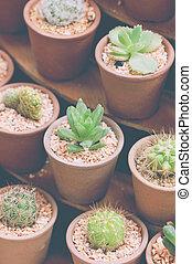 Small Cactus Plant Pot