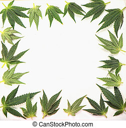 Small cannabis leaves forming a frame isolated over white...
