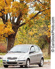 Small car in the autumn forest