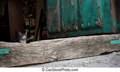 Small cat jumping from inside of antique wooden door - Small...