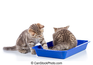 Small cat kittens in toilet tray box with litter isolated on white