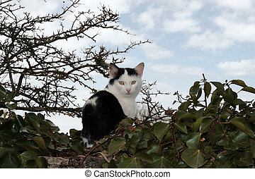small cat on a wall