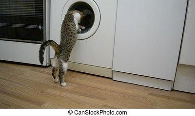 Small cat watches a working washing machine