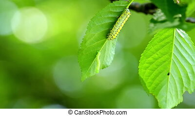 Small caterpillars on the tree leaf