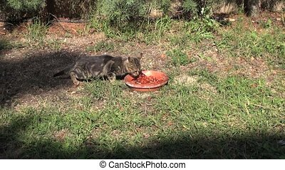 small cats coming to eat 30