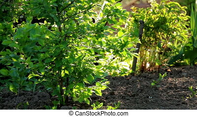 Small cherry tree and green grass on bright backlit. Spider...