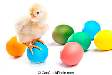 small chick with easter eggs. isolated
