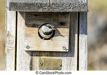 Small chickadee in a birdhouse.