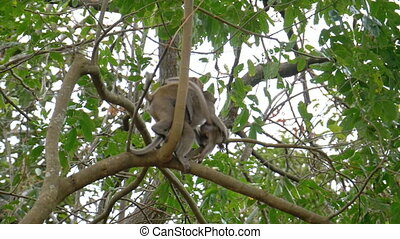 Small chimpanzees climb trees in the jungle. Thailand. Slow...