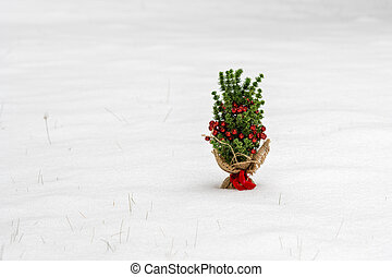 Small Christmas tree in the snow