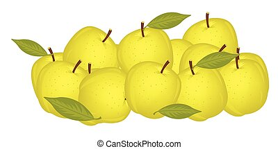 Small circle yellow apple - Much yellow ripe apples on white...