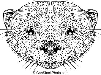 small-clawed, tête, loutre, dessin, asiatique