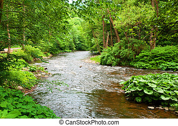Small Clean River and Green Overgrown River Banks