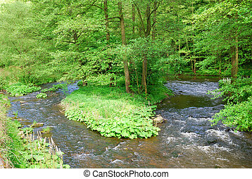 Small clean river flowing through green trees forest