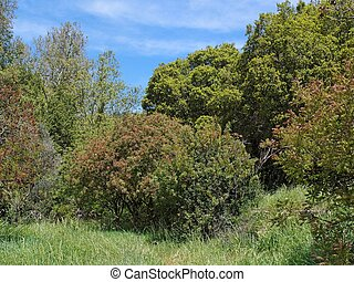 Small clearing in the Mediterranean forest in bright spring...