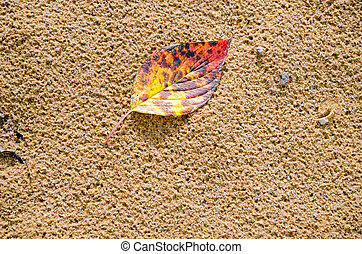 small colorful autumn leaf lie background wet sand