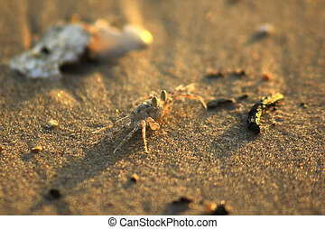Small crab on the sand.