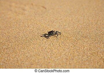small crab walking on sand