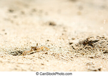 Small crabs on the beach