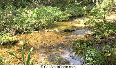 Small creek in Topes de Collantes, Cuba