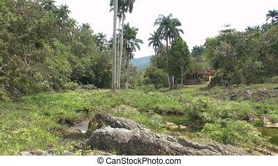 Small creek in Topes de Collantes