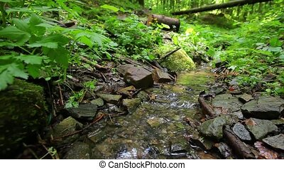 Small creek out in the wood.