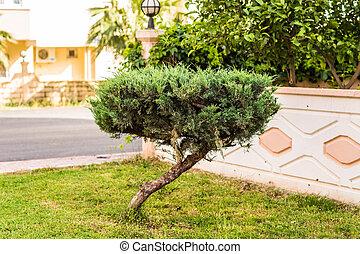 small crooked tree