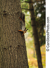 small curious squirrel on a tree trunk